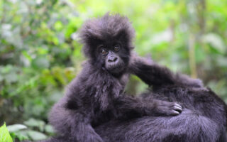 7 Days Best of Rwanda Safari