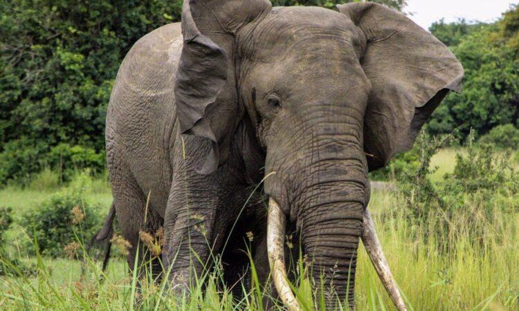 17 Days Uganda Rwanda Safari