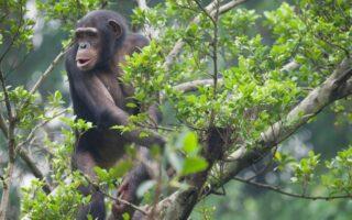 4 Days Nyungwe Forest & Akagera Wildlife Safari
