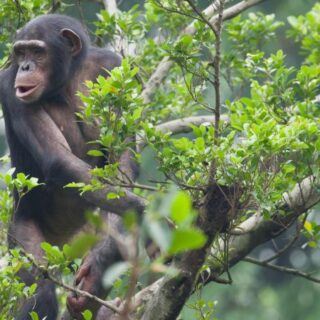 4 Days Nyungwe Forest & Akagera Wildlife Safari