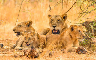4 Days Semuliki & Queen Elizabeth Wildlife Safari