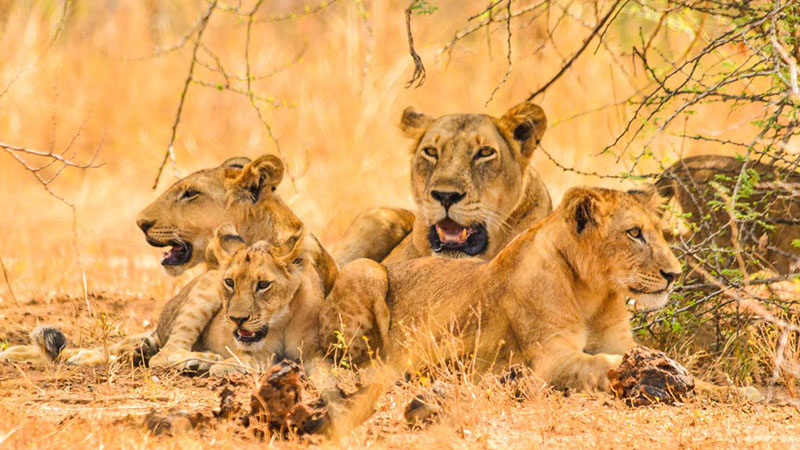13 Days Uganda Birding and Wildlife Safari
