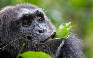 5 Days Kibale Forest & Semuliki Wildlife Safari