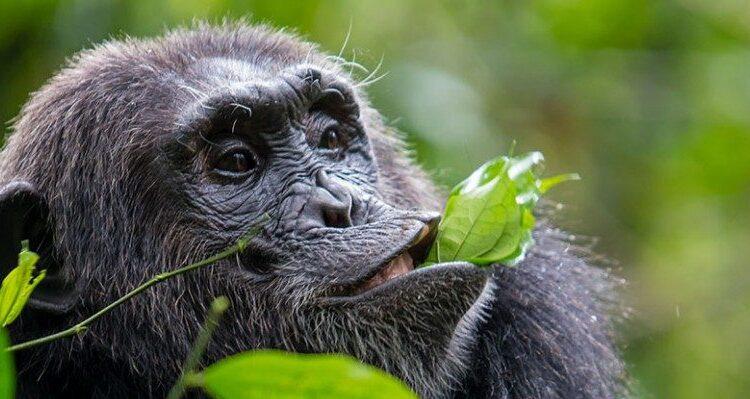 5 Days Kibale Forest & Semuliki Wildlife Safari