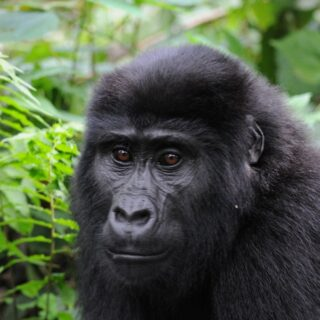 13 Days Uganda Primates & Kenya Wildlife Safari