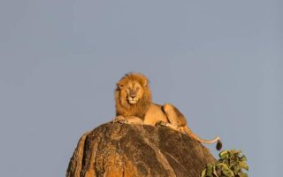 5 Days Kidepo Wildlife & Aruu Falls Tour