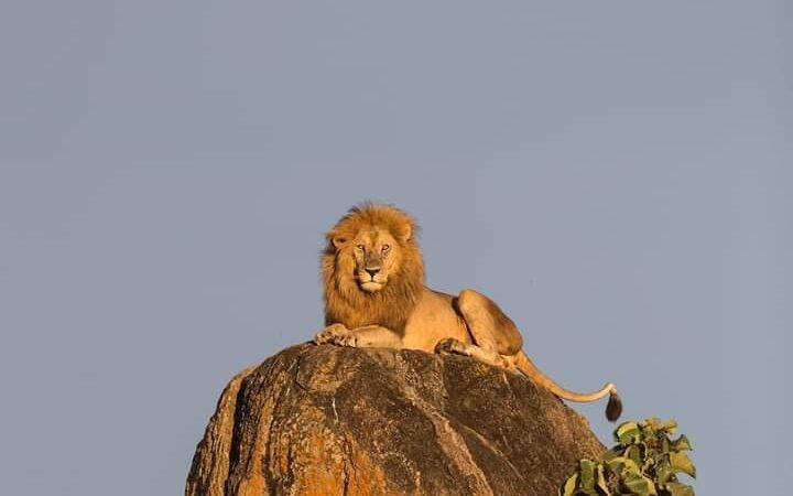 5 Days Kidepo Wildlife & Aruu Falls Tour