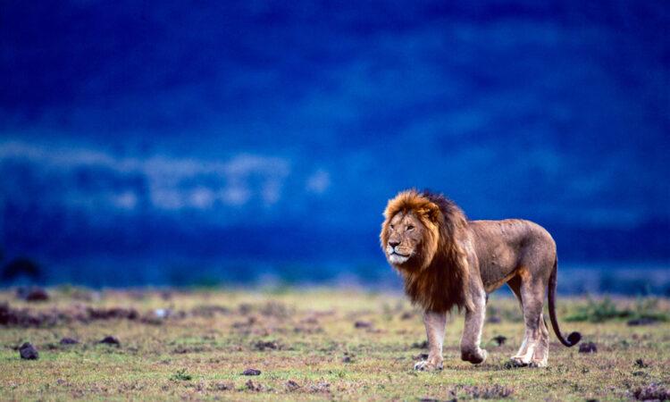 Valentine Safari destinations in Rwanda