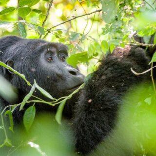 4 Days Uganda Rwanda Adventure
