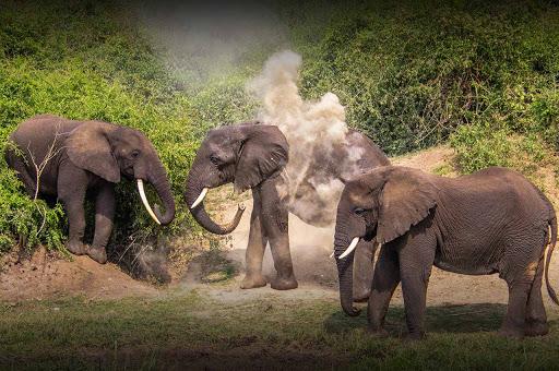 9 Days Best Uganda Safari