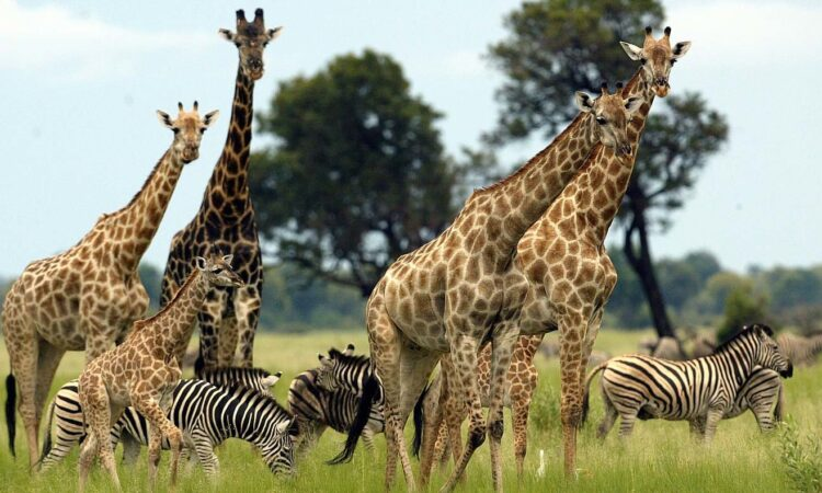 Top Wildlife Reserves in Uganda