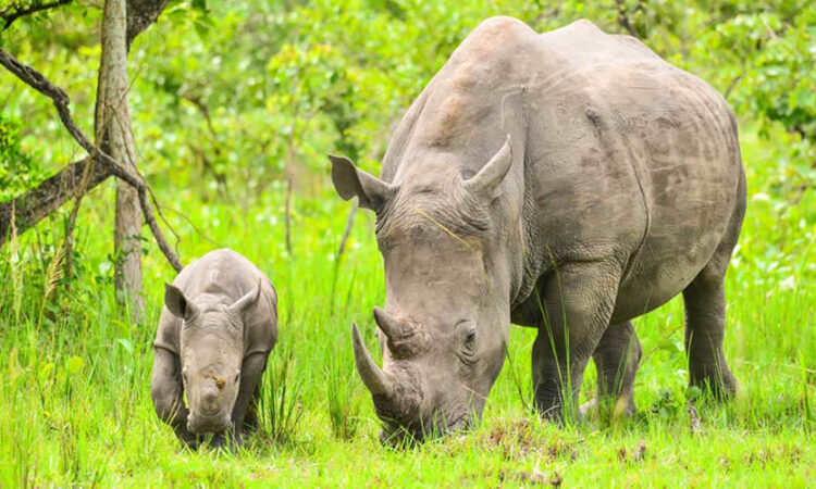 Activities in Ziwa Rhino Sanctuary