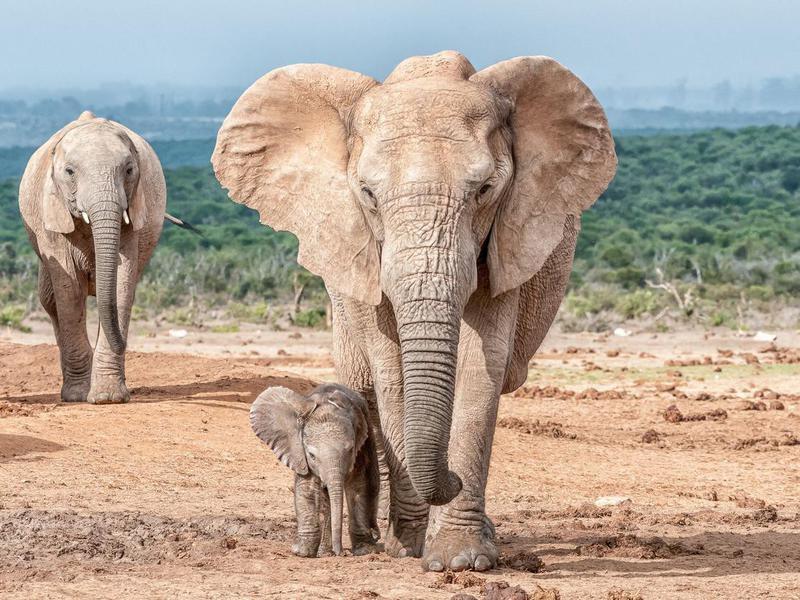 Best Animal moms in the wild
