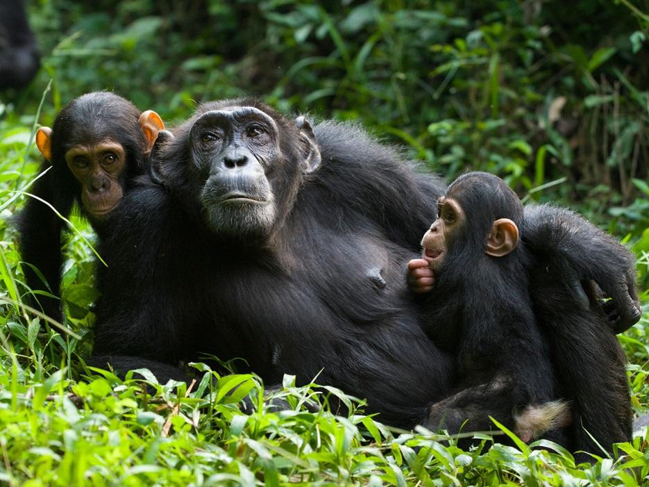 7 Days Rwanda and Congo lowland primates' safari