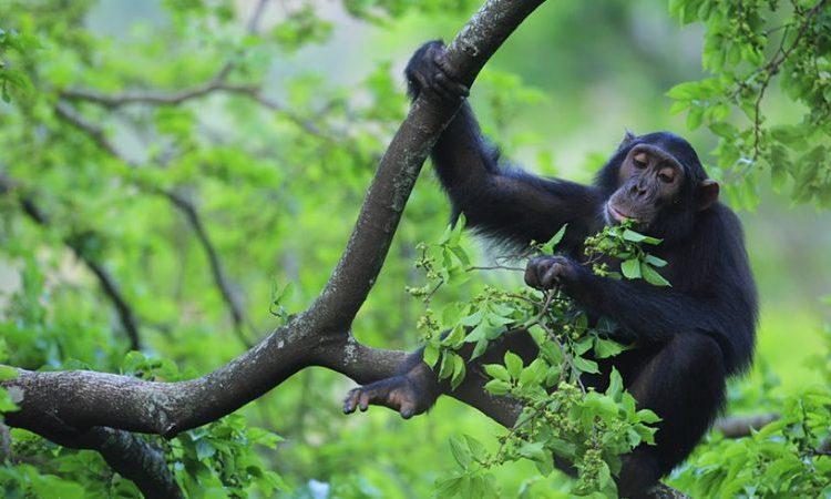 Primates Safari