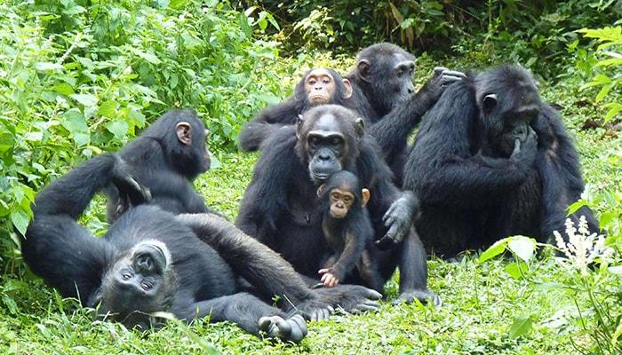 12 Days Rwanda, Congo, and Uganda Safari