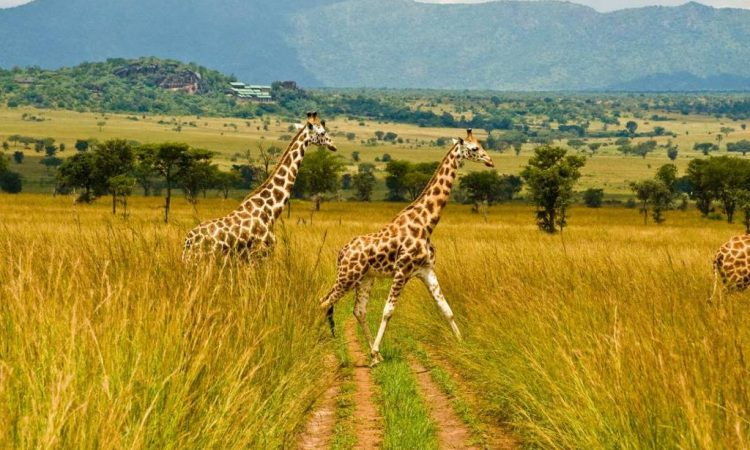 Is kidepo National park a good place to have a safari?